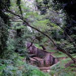natura piante e animali nel parco del Circeo